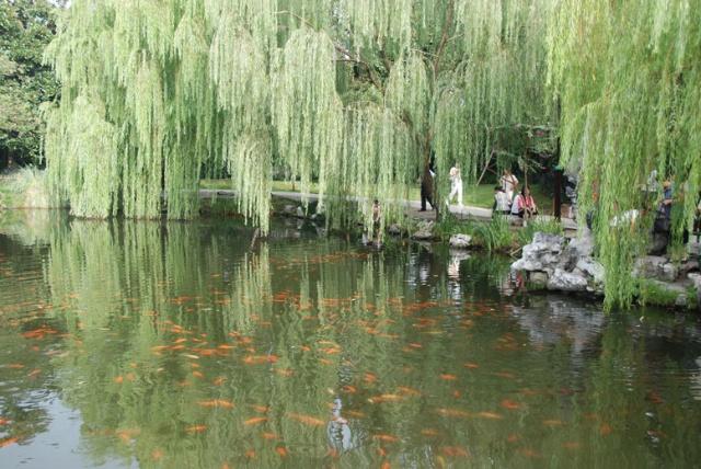 【南埠秀色】杭州西湖-那山那水电子竞技艺术图片