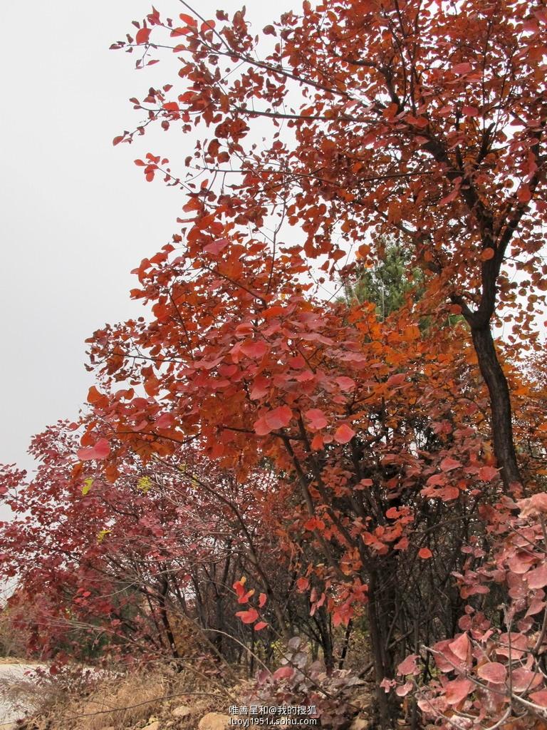 北京西山八大处公园,北京千灵山,北京红螺寺风景区,百望山森林公园