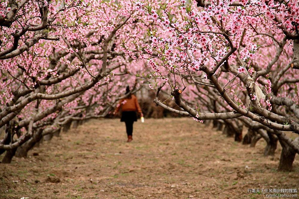 因为家里就有一棵桃树