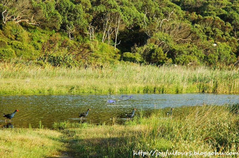 阳光露台博客_山水画卷大洋路之一-行走在澳洲别样的山水间-搜狐博客
