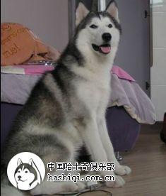 我喜欢的小动物 沅沅的blog 搜狐博客