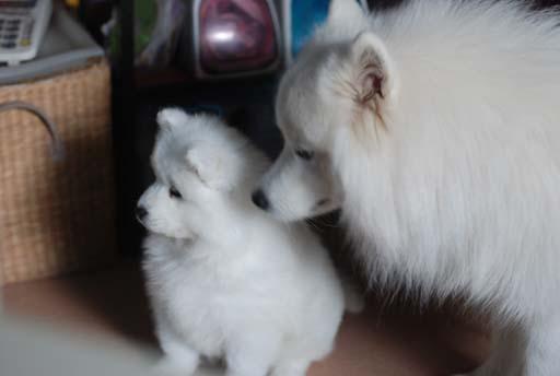 壁纸 动物 狗 狗狗 猫 猫咪 小猫 桌面 512_344