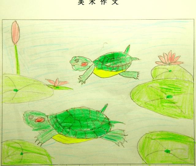 小乌龟是两栖动物