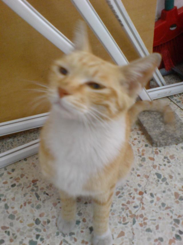 教室里巧遇我家小黄猫的同胞