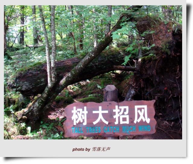 沿着铺好的木头栈道置身在原始的大森林中,吸吮着清新及古老
