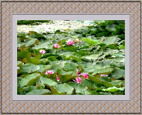 水陆草木之花,可爱者甚蕃.晋陶渊明独爱菊;自李唐来,世人甚爱牡