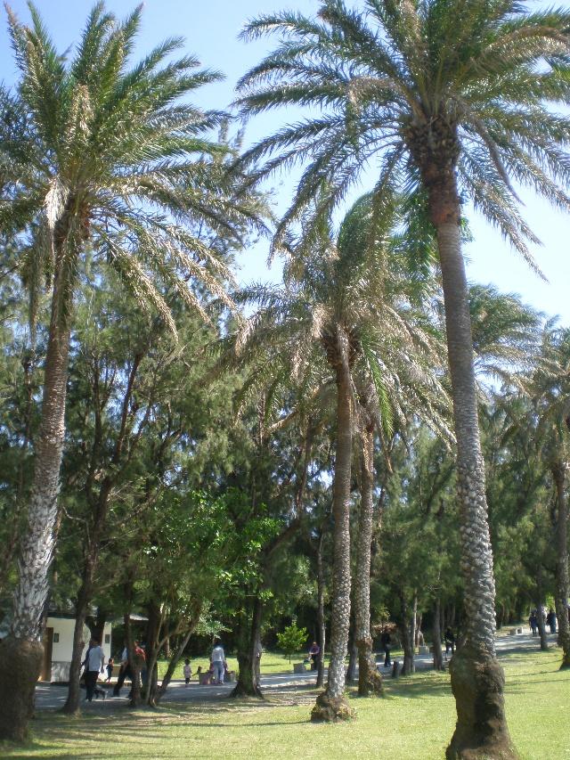 臺灣之旅(十九)———檳榔樹,椰子樹
