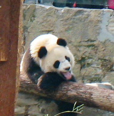 可爱的熊猫宝宝-闲子博客-我的搜狐