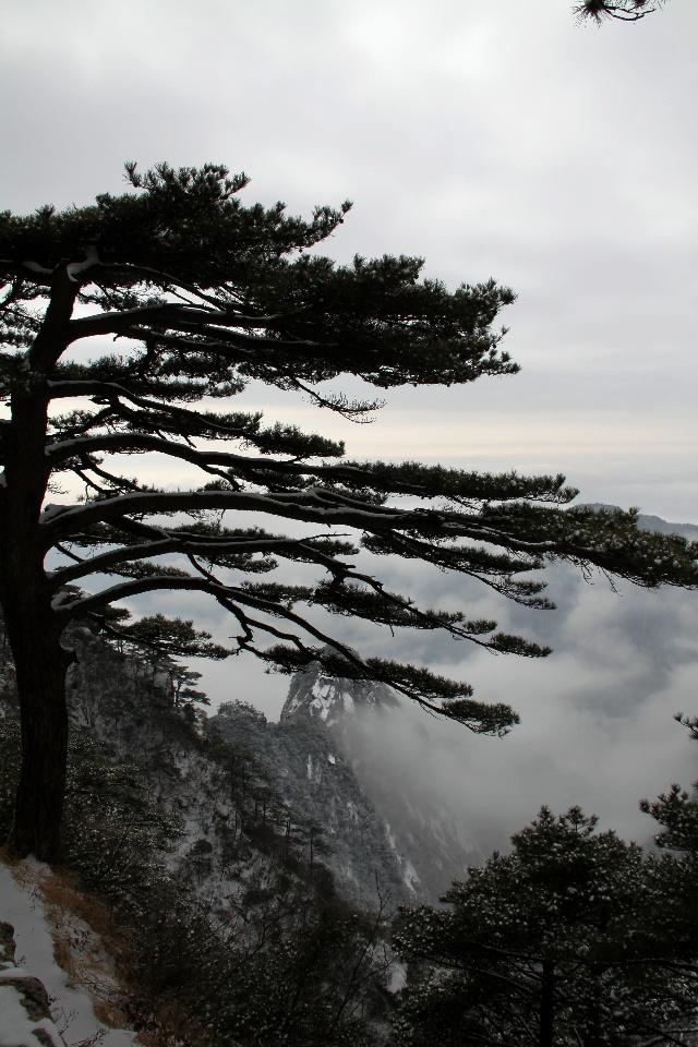 泰山奇松风景图片