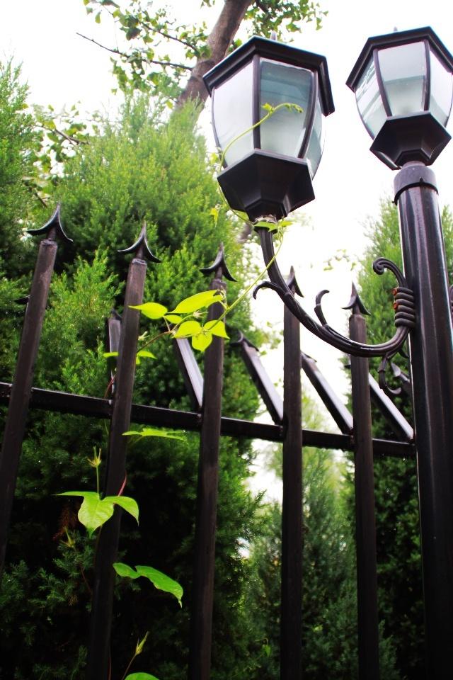 丝瓜藤也早已把棕色的葡萄架装饰的郁郁葱葱,葡萄架下水塘里的喷泉,把