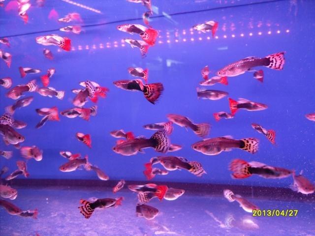 闲逛花鸟鱼市场(三)